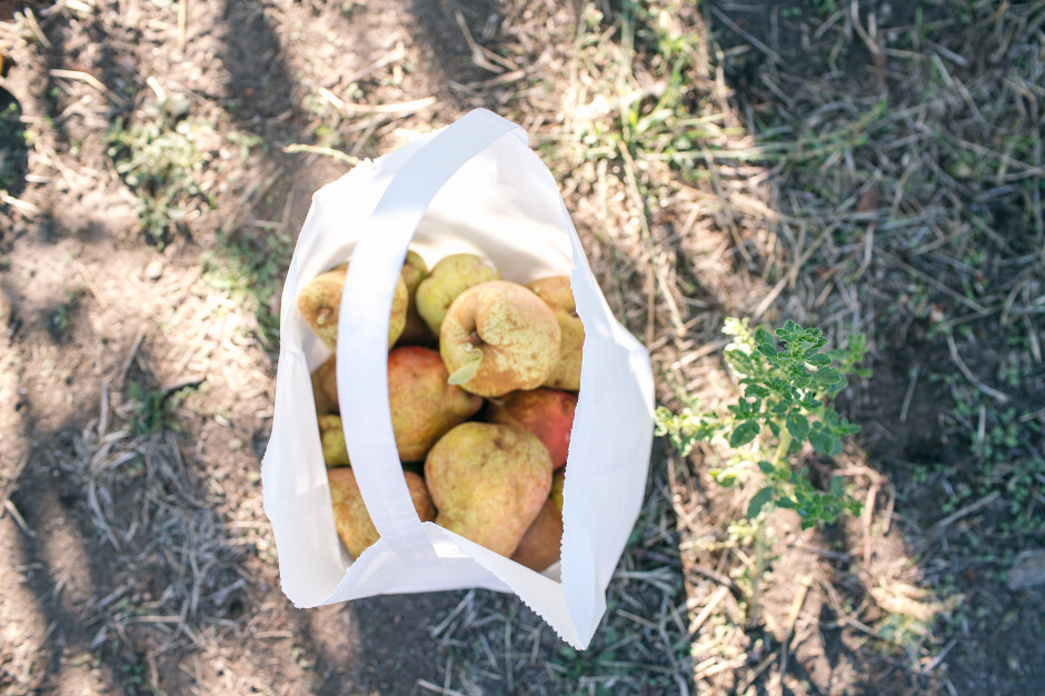 BAileys-Apples-Blog-24
