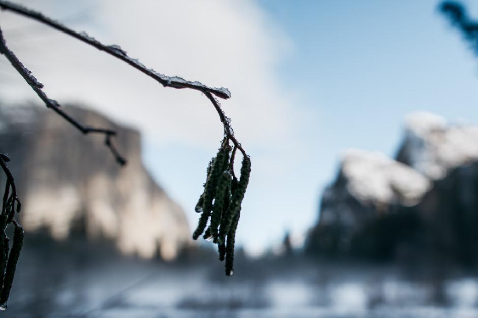 Yosemite-2016-57